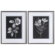 Uttermost 33694 - Uttermost Black & White Flowers Framed Prints, Set/2